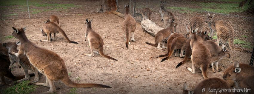 Uralla wildlife sanctuary a favourite place to take kids in the Great southern region of Western Australia