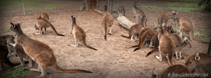 Uralla Wildlife Sanctuary | Travel Diary | Discover Australia | OurGlobetrotters.Net