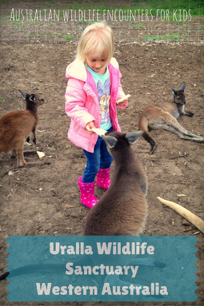Looking for a unique wildlife encounter for your children? Come and visit the Uralla Wildlife Sanctuary where you can feed orphaned kangaroos and rescue animals - for free! You can also sponsor a joey of your own and watch them grow| Uralla Wildlife Sanctuary | Western Australia | OurGlobetrotters.Net