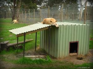 Uralla Wildlife Sanctuary | Travel Diary | DIscover Australia | OurGlobetrotters.Net