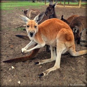 Uralla Wildlife Sanctuary | Travel Diary | OurGlobetrotters.Net