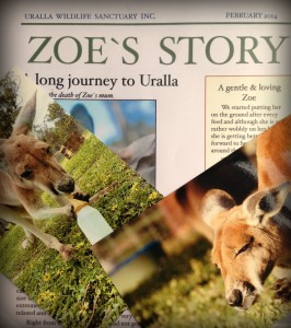 Sponsor a kangaroo at Uralla Wildlife Sanctuary | Travel Diary | Discover Australia | OurGlobetrotters.Net