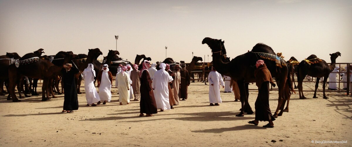 Al Dhafra Festival – Camel Beauty Contest & Traditional Bedouin Culture in the UAE
