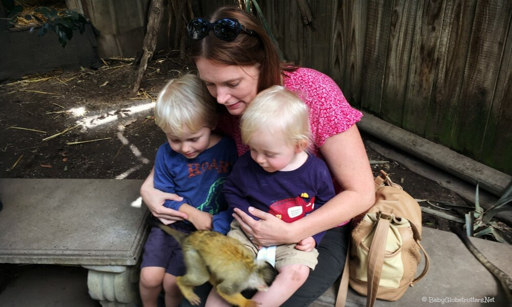 World Of Birds Hout Bay | Cape Town with Kids | OurGlobetrotters.Net