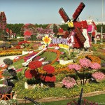 Where in the world will you find the world's largest flower garden? Dubai Miracle Garden | Discover the UAE | OurGlobetrotters.Net