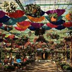 Dubai Miracle Garden - Food outlet area | Discover the UAE | OurGlobetrotters.Net