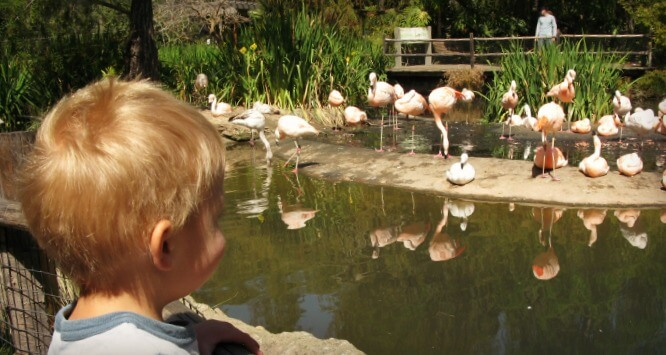 San Diego Zoo's Safari Park | Insider tips for San Diego's Top 5 Family Attractions