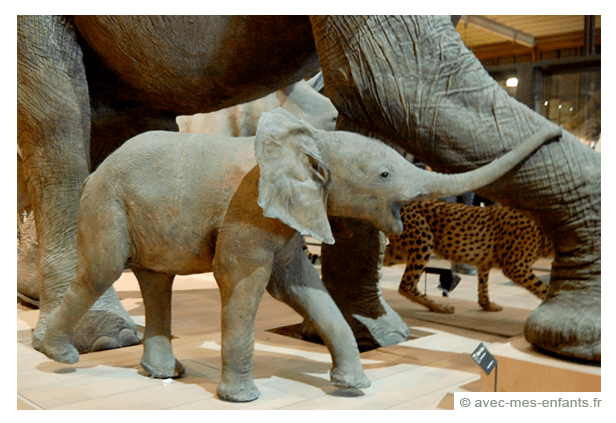 Museum of natural history | Explore My City - Paris | OurGlobetrotters.Net