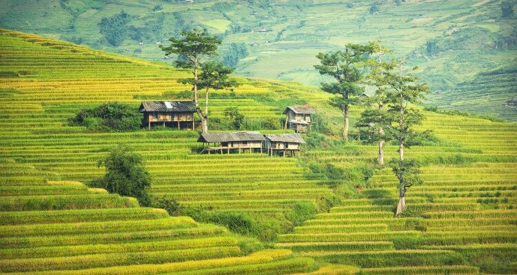 Rice paddies In Bali Indonesia