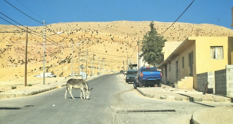 Jordan Road Trip donkey crossing