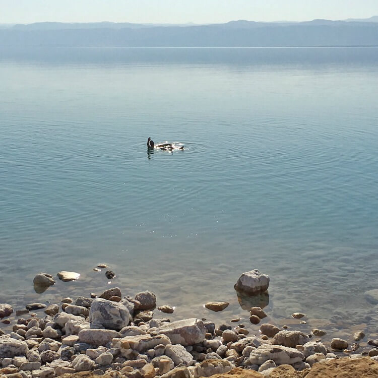 Enjoying floating in the Dead Sea at Mövenpick Resort & Spa