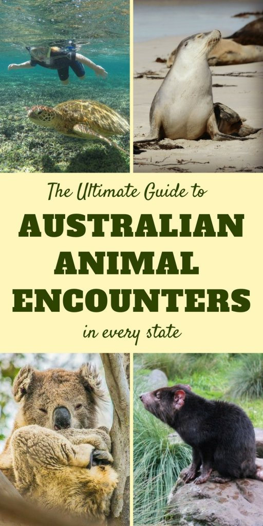 Australian Animals | Best places to visit for close encounters with Australian wildlife | Our Globetrotters