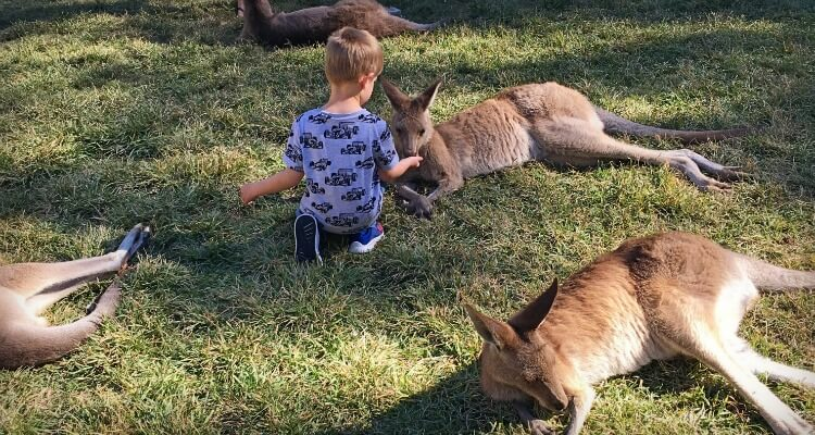 Feeding Kangaroos at Currumbin | Please Australian Animal Encounters | Our Globetrotters