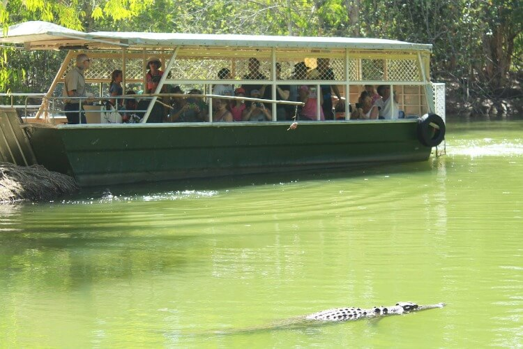Hartley's Lagoon at Hartley's Crocodile Adventures | Best australian animal encounters with kids | Our Globetrotters