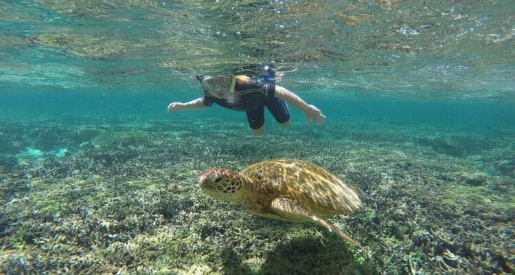 Lady Elliot Island Great Barrier Reef | Best Australian Animal Encounters | Our Globetrotters