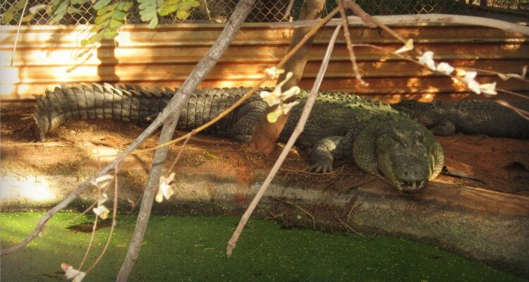 Malcolm Douglas Crocodile Park in Broome | Best Australian Animal Encounters | Our Globetrotters