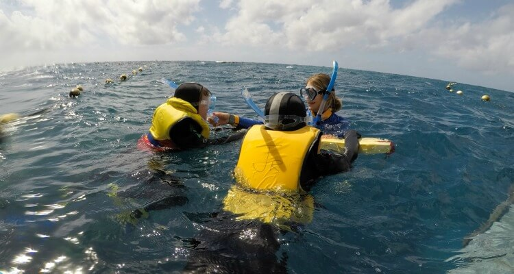 Great Barrier Reef with Kids | Australia's best wildlife encounters