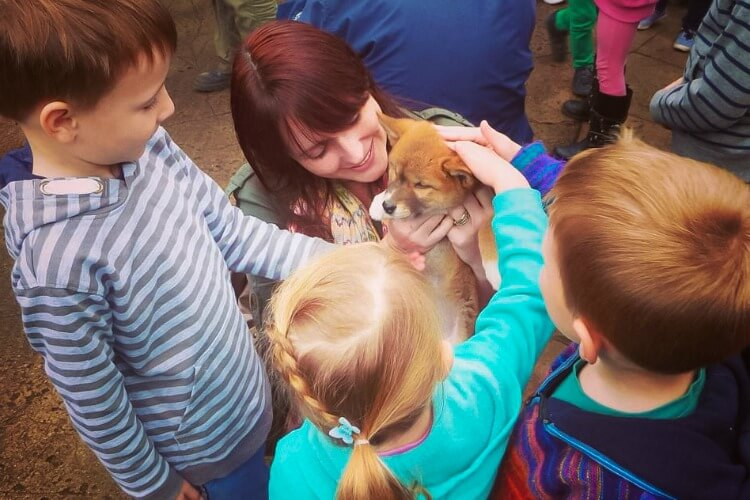 Patting a baby dingo at Australian Reptile Park | Australia's Best wildlife encounters for kids
