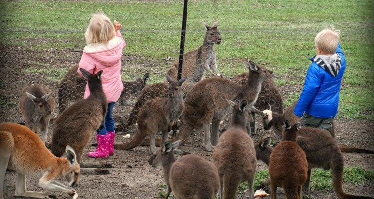 Uralla Wildlife Sanctuary | Australia's best wildlife encounters for kids