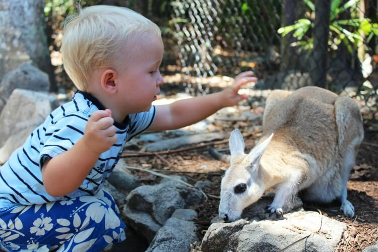 Wildlife Habitat Port Douglas | Best Australian Animal Encounters with Kids | Our Globetrotters
